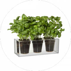 Boskke Cube Small triple pack